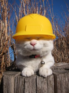 cat in construction gear