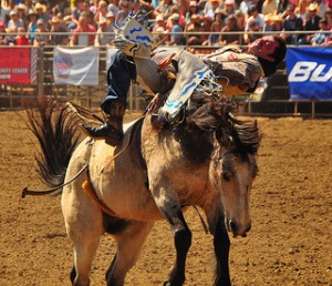 bullrider with back pain