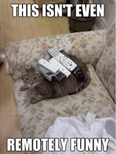 stuff on cats